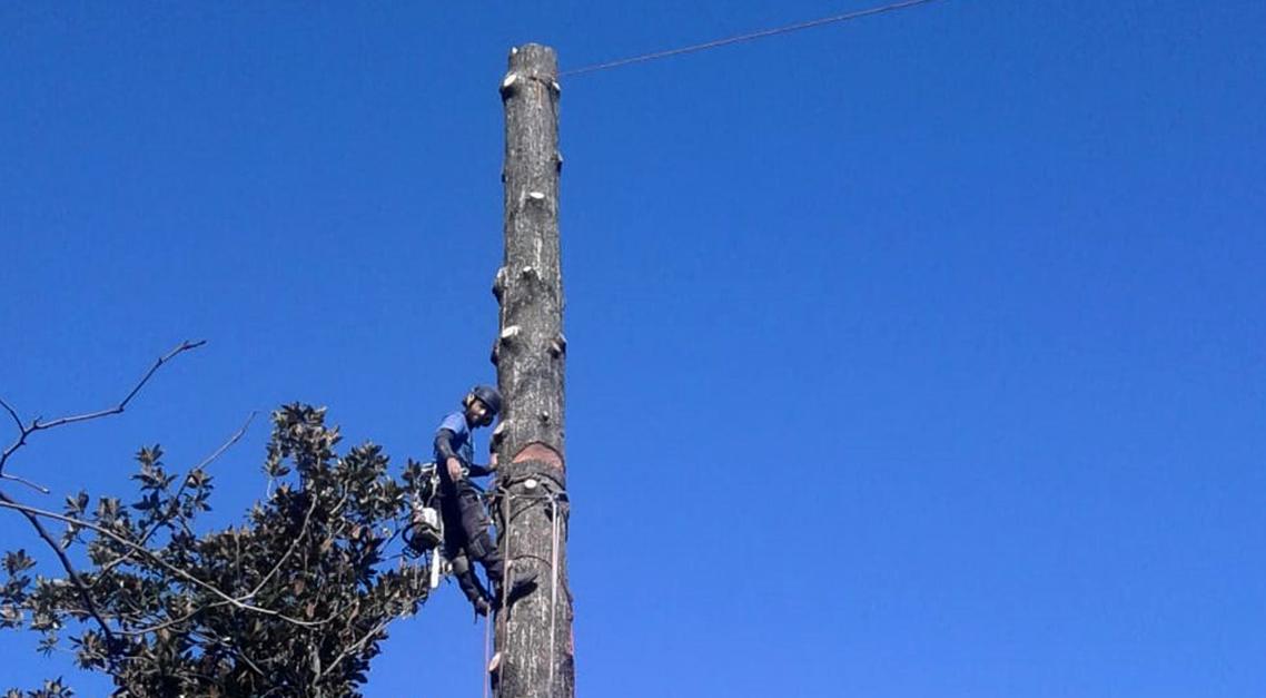 abbattimenti treeclimbing